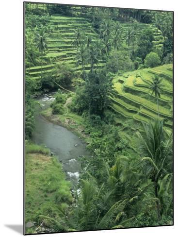 Terraced Rice Paddies (Oryza Sativa), Java, Indonesia-Tim Hauf-Mounted Photographic Print
