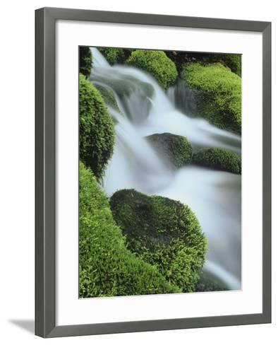 Small Mountain Stream and Moss-Covered Rocks, Great Smoky Mountains National Park, Tennessee, USA-Adam Jones-Framed Art Print