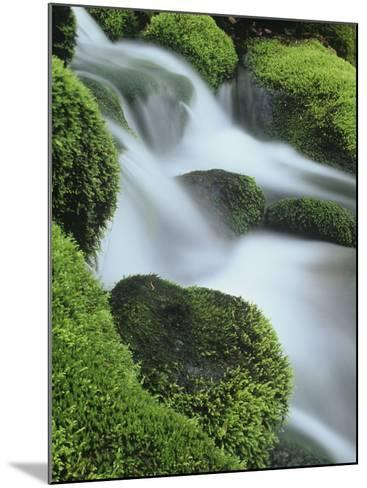 Small Mountain Stream and Moss-Covered Rocks, Great Smoky Mountains National Park, Tennessee, USA-Adam Jones-Mounted Photographic Print