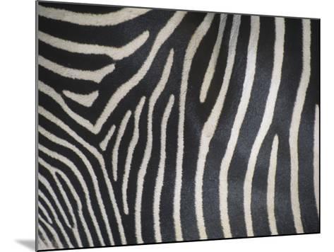 Close-Up of Grevy's Zebra Stripes, Equus Grevyi, Africa-John & Barbara Gerlach-Mounted Photographic Print