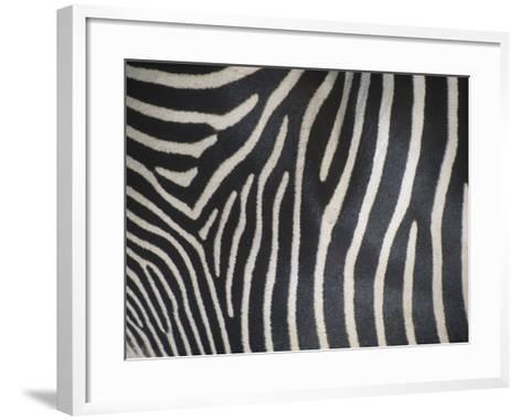 Close-Up of Grevy's Zebra Stripes, Equus Grevyi, Africa-John & Barbara Gerlach-Framed Art Print