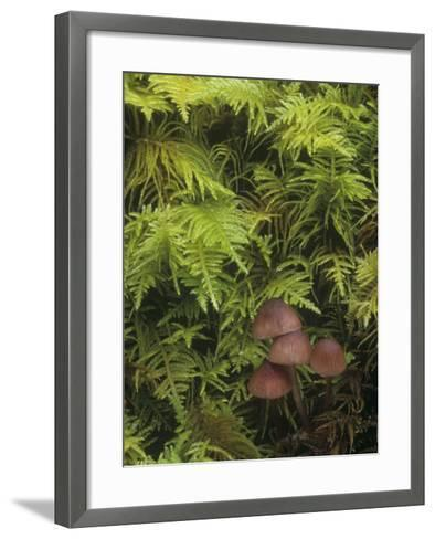 Mushrooms Growing Among Mosses on the Forest Floor-Doug Sokell-Framed Art Print
