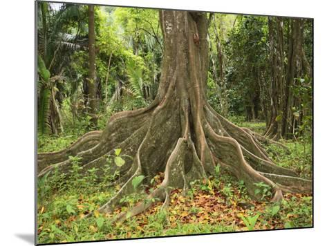 Buttress Roots of the Silk Cotton Tree, Ceiba Pentandra, Which Can Grow to over 60 Meters High-Don Grall-Mounted Photographic Print