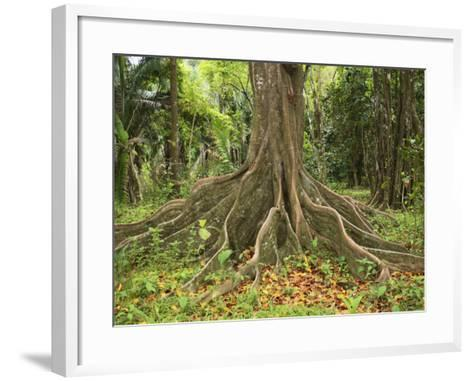 Buttress Roots of the Silk Cotton Tree, Ceiba Pentandra, Which Can Grow to over 60 Meters High-Don Grall-Framed Art Print