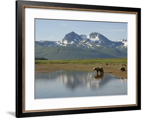 Brown Bear with Cub (Ursus Arctos) Crossing Creek, Alaska-Tom Walker-Framed Art Print