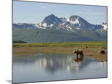 Brown Bear with Cub (Ursus Arctos) Crossing Creek, Alaska-Tom Walker-Mounted Photographic Print