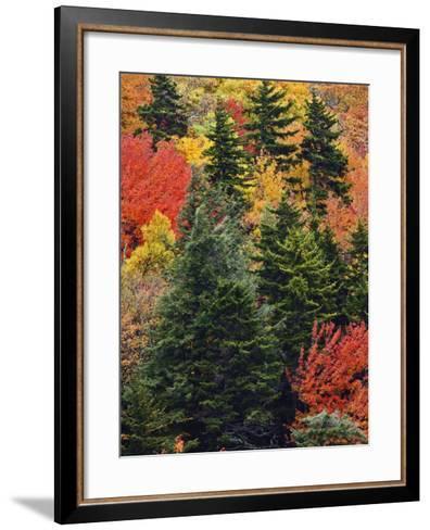 Fall Colors in the Southern Appalachian Mountains, North Carolina, USA-Adam Jones-Framed Art Print