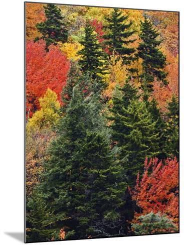 Fall Colors in the Southern Appalachian Mountains, North Carolina, USA-Adam Jones-Mounted Photographic Print