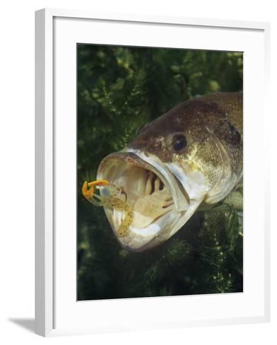 Largemouth Bass with Plastic Lure Underwater-Wally Eberhart-Framed Art Print