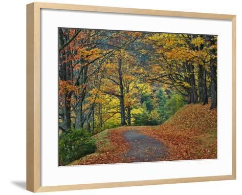 Walking Trail around Bass Lake in the Autumn, Blowing Rock, North Carolina, USA-Adam Jones-Framed Art Print