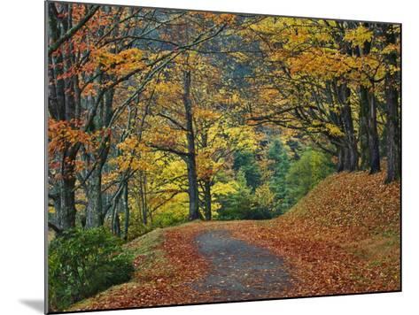 Walking Trail around Bass Lake in the Autumn, Blowing Rock, North Carolina, USA-Adam Jones-Mounted Photographic Print