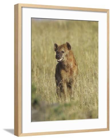 Spotted Hyena on the Savanna, Crocuta Crocuta, Masai Mara, Kenya, Africa-Adam Jones-Framed Art Print