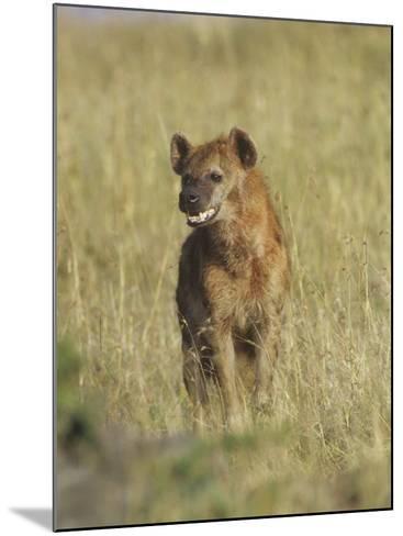Spotted Hyena on the Savanna, Crocuta Crocuta, Masai Mara, Kenya, Africa-Adam Jones-Mounted Photographic Print
