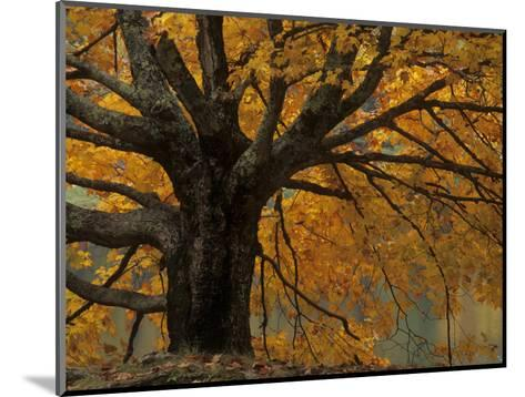 Autumn Foliage, North Carolina-Adam Jones-Mounted Photographic Print
