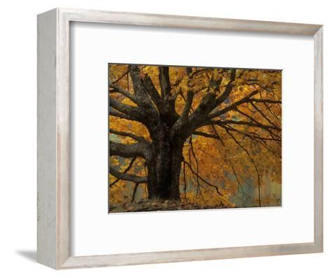 Autumn Foliage, North Carolina-Adam Jones-Framed Art Print
