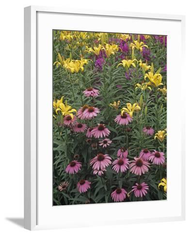 Purple Coneflowers, Echinacea Purpurea, and Daylilies, Hemerocallis, in a Garden-Adam Jones-Framed Art Print