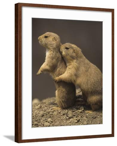 Black-Tailed Prairie Dogs, Cynomys Ludovicianus, Western North America-Adam Jones-Framed Art Print