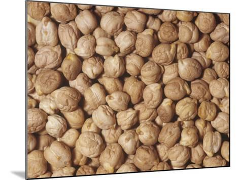Garbanzo Beans or Chick Peas (Cicer Arietinum). Native to the Middle East-Ken Lucas-Mounted Photographic Print