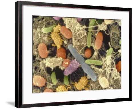 Bacterial Contamination of Retail Chicken Meat and Skin after 3 Days in a Refrigerator--Framed Art Print