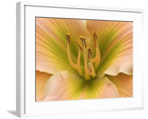 Flower Parts of a Hybrid Daylily, Hemerocallis, Showing the Pistil and Stamens with Pollen-Adam Jones-Framed Art Print