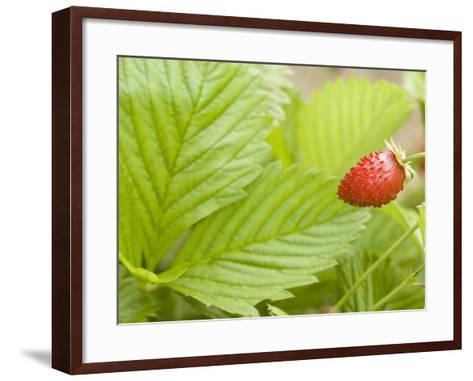 Strawberry--Framed Art Print