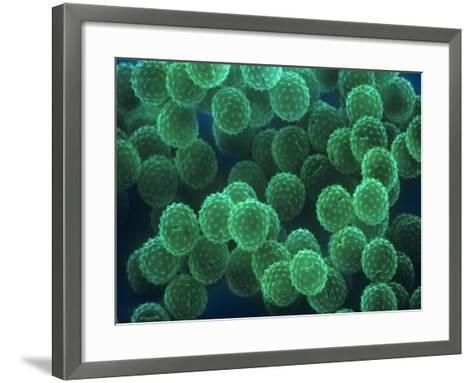 Ragweed Pollen, Ambrosia Psilostachya-David Phillips-Framed Art Print