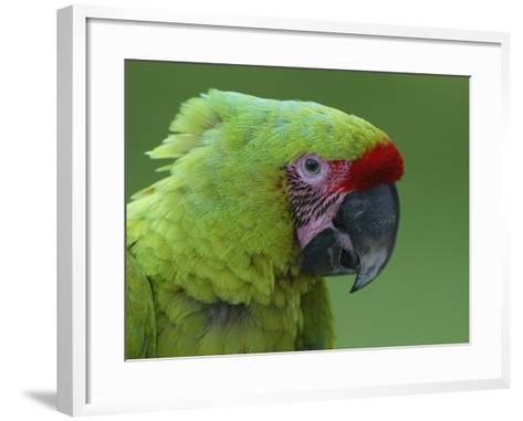 Military Macaw Head-Arthur Morris-Framed Art Print