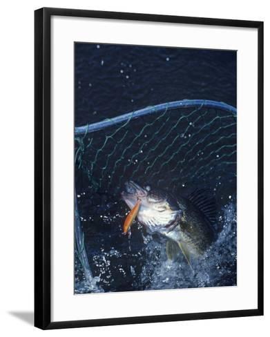 Netting Walleye-Wally Eberhart-Framed Art Print