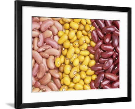 Bean Varieties: Left- Red Kidney, Center- Marfax, Right- Canada Red-David Cavagnaro-Framed Art Print
