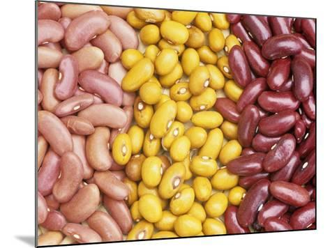 Bean Varieties: Left- Red Kidney, Center- Marfax, Right- Canada Red-David Cavagnaro-Mounted Photographic Print