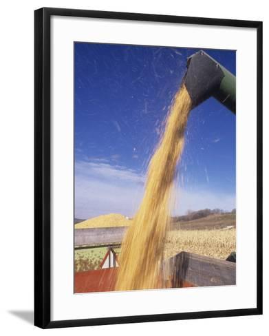 Loading Harvested Corn into a Truck (Zea Mays)-David Cavagnaro-Framed Art Print
