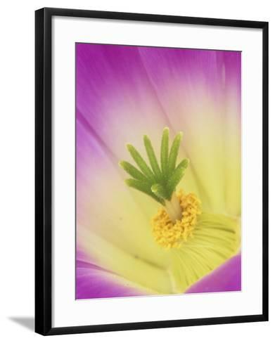 Close-Up of Flower Parts of a Cactus, Echinocactus-Adam Jones-Framed Art Print
