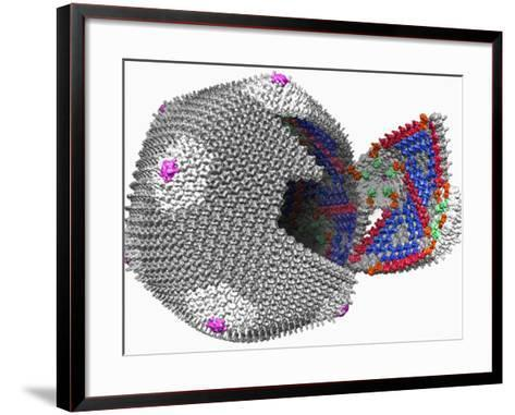 Three-Dimensional Reconstruction Calculated from Individual Images of Chilo Iridescent Virus-Timothy Baker-Framed Art Print