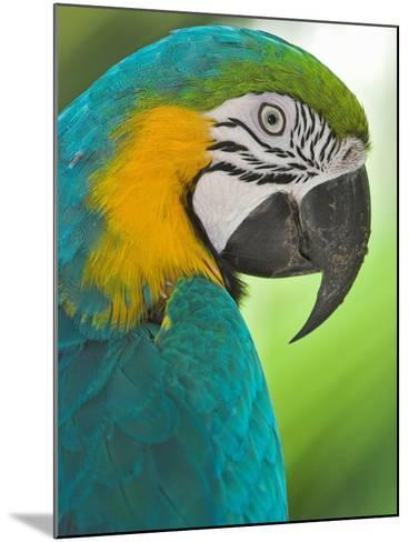 Blue Macaw, Costa Rica-Glenn Bartley-Mounted Photographic Print