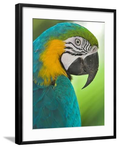 Blue Macaw, Costa Rica-Glenn Bartley-Framed Art Print
