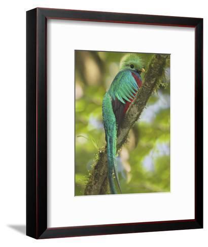 Quetzal, Costa Rica-Glenn Bartley-Framed Art Print