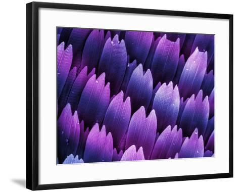 Butterfly Wing Scales, SEM X706-Kenneth Bart-Framed Art Print