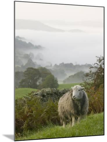 A Herdwick Sheep in the Lake District, United Kingdom-Ashley Cooper-Mounted Photographic Print