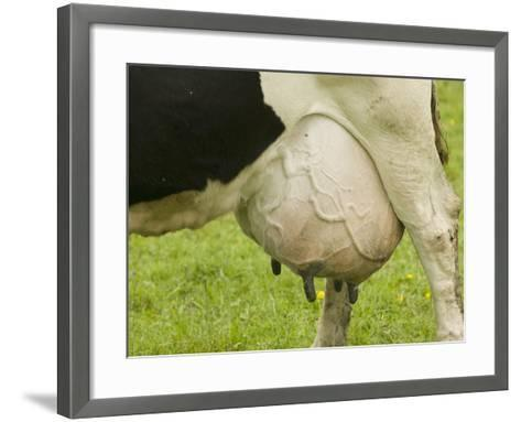 A Dairy Cow with a Full Udder-Ashley Cooper-Framed Art Print