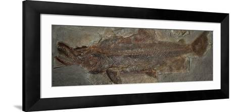 One Million Year Old Sockeye Salmon Fossil, Skokomish River Valley, Olympic Peninsula, Washington-Buff & Gerald Corsi-Framed Art Print