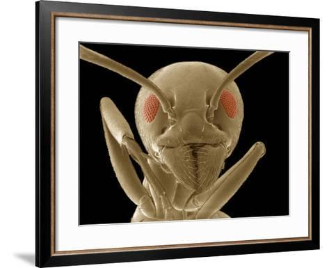 Ant Face Showing the Antennae, Compound Eyes, Mouthparts, and Forelegs, SEM-Thomas Deerinck-Framed Art Print