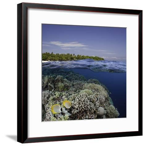 Philippine Pangalo Reef Scene with Butterflyfish and Balicasag Island, Digital Composite-David Fleetham-Framed Art Print