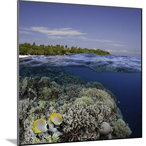 Philippine Pangalo Reef Scene with Butterflyfish and Balicasag Island, Digital Composite-David Fleetham-Mounted Photographic Print