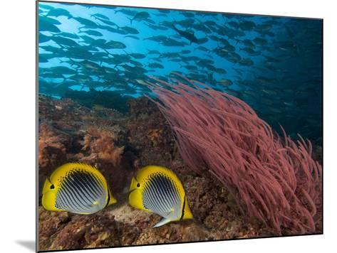 Coral Reef Scene with Schooling Jacks in the Background, Red Alcyonarian Corals-David Fleetham-Mounted Photographic Print