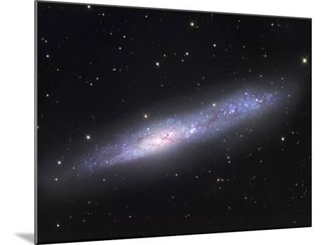 NGC 55, Irregular Galaxy in Sculptor NGC 55 Is One of the Nearest Members of the Sculptor Galaxy-Robert Gendler-Mounted Photographic Print