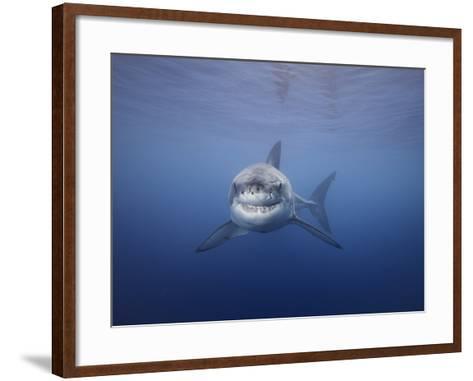 Great White Shark (Carcharodon Carcharias), Guadalupe Island, Mexico-David Fleetham-Framed Art Print