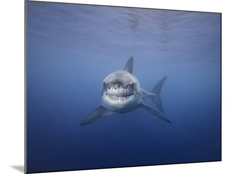 Great White Shark (Carcharodon Carcharias), Guadalupe Island, Mexico-David Fleetham-Mounted Photographic Print