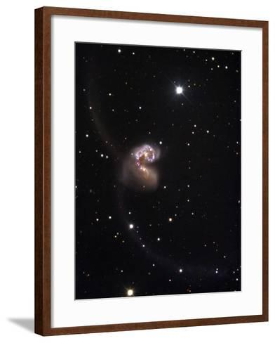 The Merging Galaxies NGC 4038 and 4039, Popularly Referred to as the Antennae Galaxies-Robert Gendler-Framed Art Print