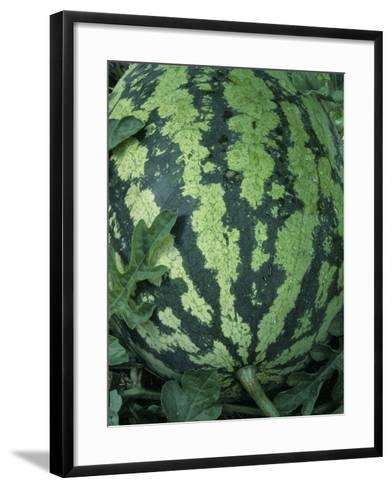 A Ripe Sweet Favorite Variety Watermelon-Wally Eberhart-Framed Art Print