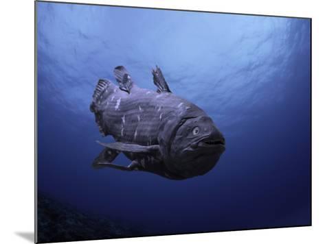 Digital Illustration of Coelacanth That Was Believed to Have Become Extinct-David Fleetham-Mounted Photographic Print